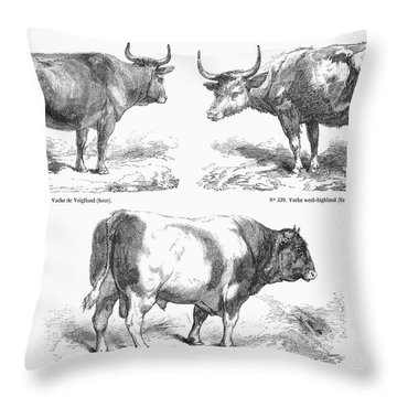 Cattle Breeds, 1856 Throw Pillow by Granger
