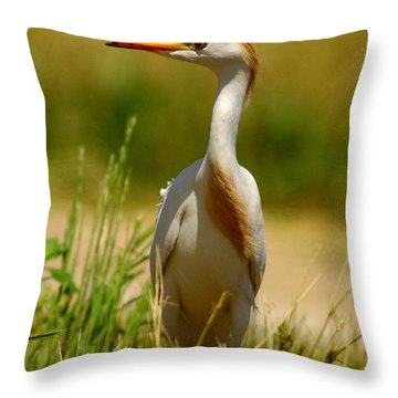 Cattle Egret With Closed Eyelid Throw Pillow by Robert Frederick