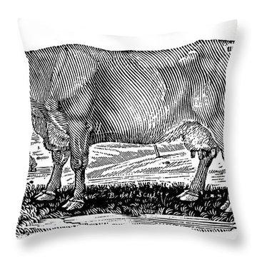 Cattle Throw Pillow by Granger