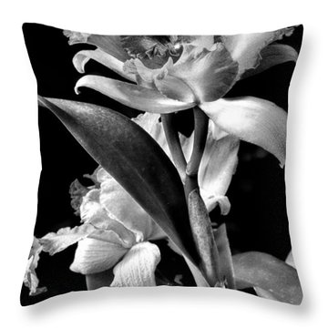 Cattleya - Bw Throw Pillow by Christopher Holmes