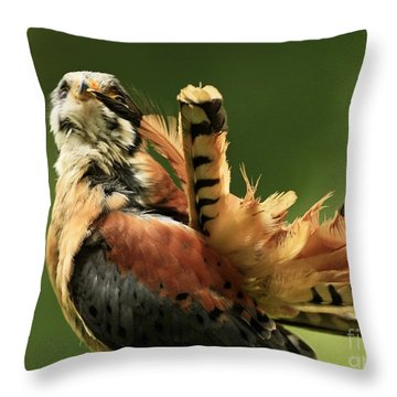Caught In The Act  American Kestrel Pruning Throw Pillow by Inspired Nature Photography Fine Art Photography