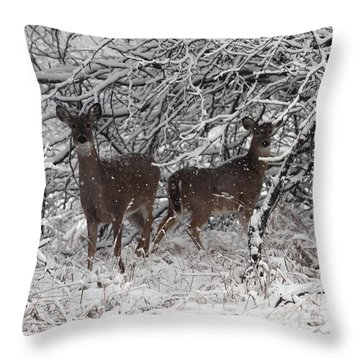 Throw Pillow featuring the photograph Caught In The Snow Storm by Elizabeth Winter