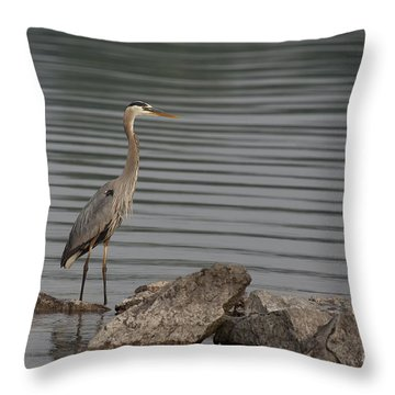 Cautious Throw Pillow by Eunice Gibb