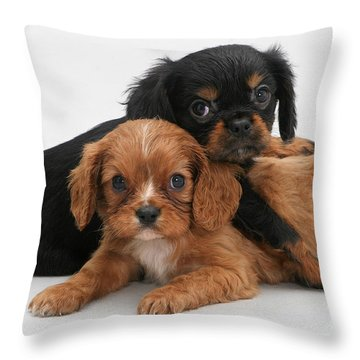 Cavalier King Charles Spaniel Puppies Throw Pillow by Jane Burton