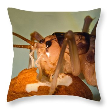 Cave Cricket Feeding On Almond 16 Throw Pillow by Douglas Barnett