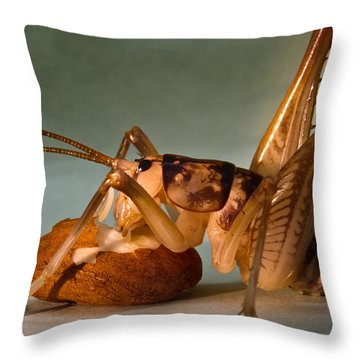 Cave Cricket Feeding On Almond 9 Throw Pillow by Douglas Barnett