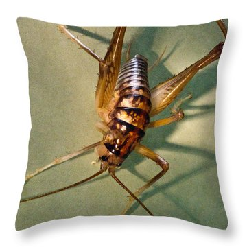 Cave Cricket In Shadow 1 Throw Pillow by Douglas Barnett