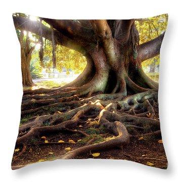 Centenarian Tree Throw Pillow by Carlos Caetano
