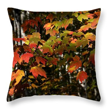 Changing Of The Colors Throw Pillow by Rich Franco