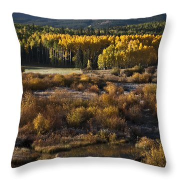 Changing Season Throw Pillow by Jeff Kolker
