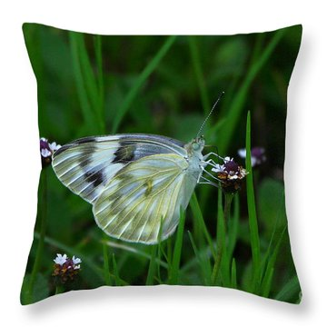Checkered White Butterfly Throw Pillow by Barbara Bowen