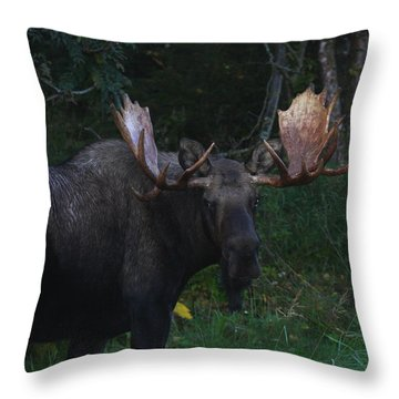 Throw Pillow featuring the photograph Checking You Out by Doug Lloyd