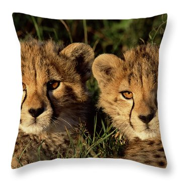 Cheetah Acinonyx Jubatus Two Cubs Throw Pillow by Peter Blackwell