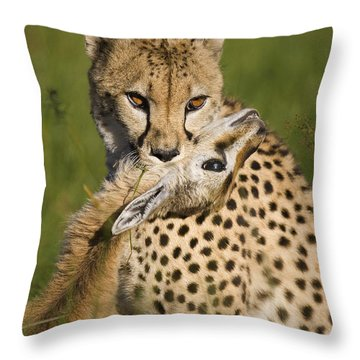 Cheetah Acinonyx Jubatus With Its Kill Throw Pillow by Suzi Eszterhas