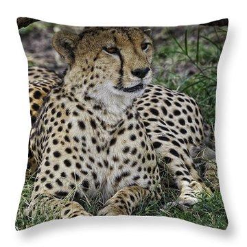 Cheetah Alert Throw Pillow