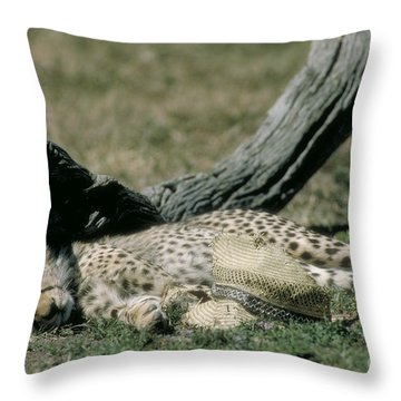 Cheetah Cub Sleeping And Guarding Hat Throw Pillow by Greg Dimijian