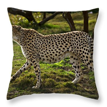 Cheetah  Throw Pillow by Garry Gay