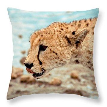 Cheetah Headshot Throw Pillow by Darcy Michaelchuk