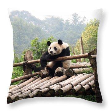 Chengdu Panda Throw Pillow by Carla Parris