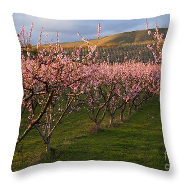 Cherry Blossom Pink Throw Pillow by Mike  Dawson