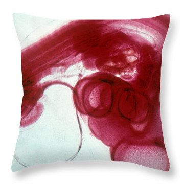 Chick Development 1212 Throw Pillow by Science Source
