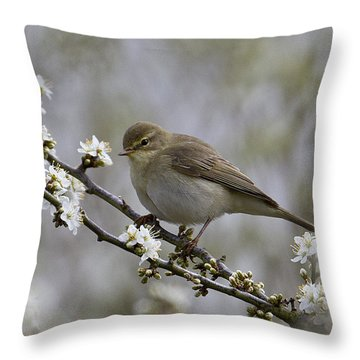 Chiff Chaff On Blackthorn Blossom Throw Pillow