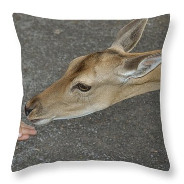 Child Feeding Deer Throw Pillow by Matthias Hauser
