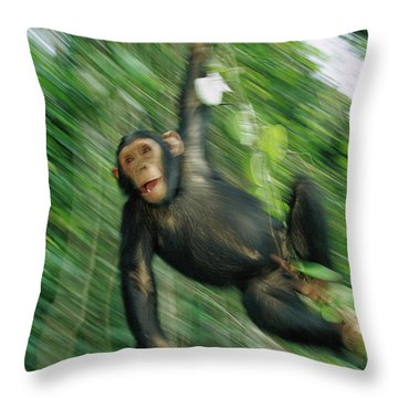 Chimpanzee Pan Troglodytes Juvenile Throw Pillow by Cyril Ruoso