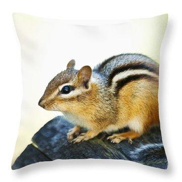 Chipmunk Throw Pillow by Elena Elisseeva