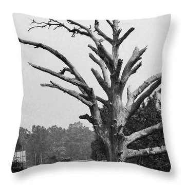Chiseled Tree In Highway Throw Pillow by Sumit Mehndiratta