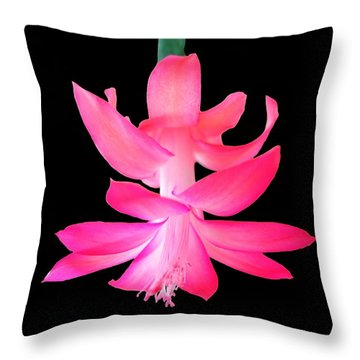 Christmas Cactus Throw Pillow by Steven Clipperton
