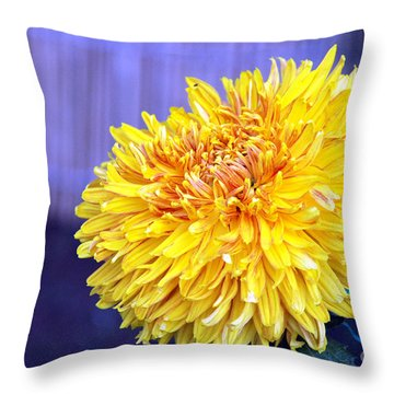 Throw Pillow featuring the photograph Chrysanthemum by Pravine Chester