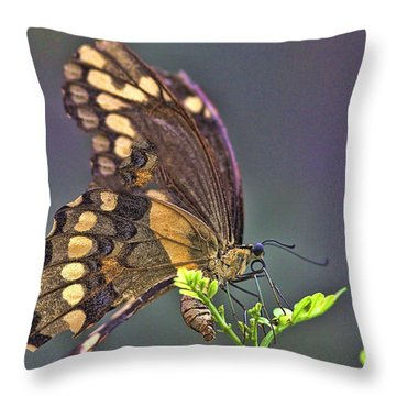 Throw Pillow featuring the photograph Circle Of Life by Anne Rodkin