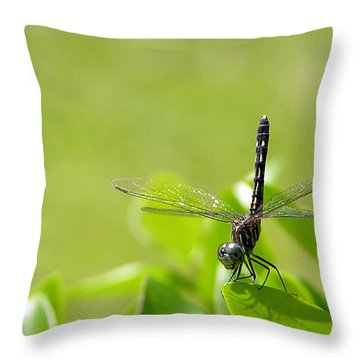Throw Pillow featuring the photograph Cleared For Take-off by Dan Wells
