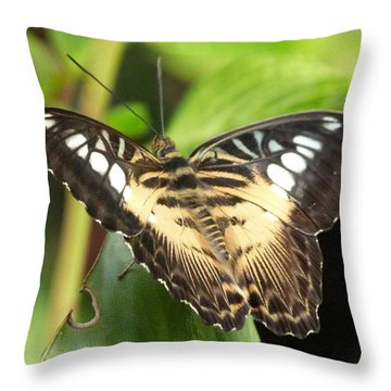 Throw Pillow featuring the photograph Clipper Butterfly by Lynn Bolt
