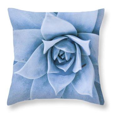 Close-up Of Blue Green Echeveria Throw Pillow