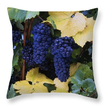 Close-up Of Ripe, Wine Grapes And Leaves Throw Pillow by Natural Selection Craig Tuttle