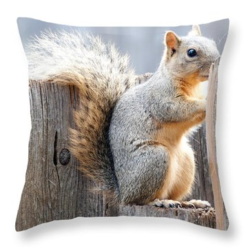 Checking If The Yard Clear For Dinner Throw Pillow