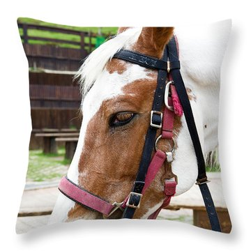 Closeup Of Horse Throw Pillow by Yew Kwang