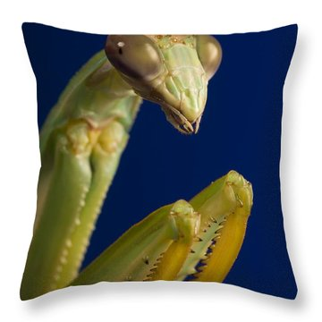 Closeup Of Praying Mantis Throw Pillow by Corey Hochachka