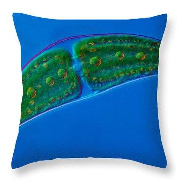 Closterium Sp. Algae Lm Throw Pillow by M. I. Walker