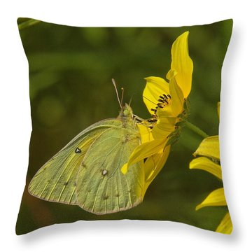 Clouded Sulphur Butterfly Din099 Throw Pillow