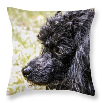 Throw Pillow featuring the photograph Coco Poodle by Ester  Rogers