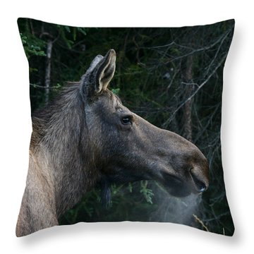 Throw Pillow featuring the photograph Cold Morning by Doug Lloyd