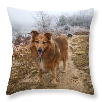 Collie On Winter Trail Throw Pillow