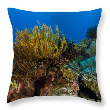 Colony Of Crinoids, Papua New Guinea Throw Pillow by Steve Jones