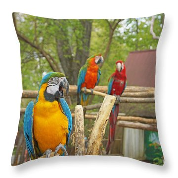 Color Of Parrots  Throw Pillow