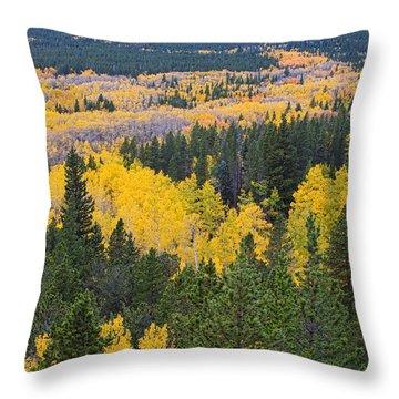 Colorado Autumn Aspens Boulder County  Throw Pillow by James BO  Insogna