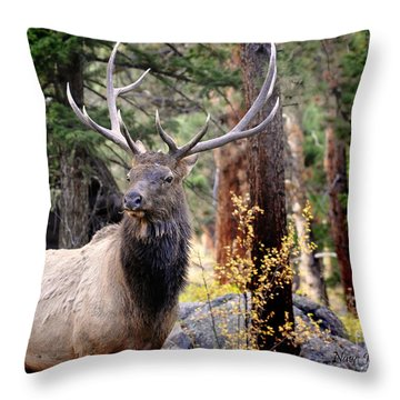 Throw Pillow featuring the photograph Colorado Elk by Nava Thompson