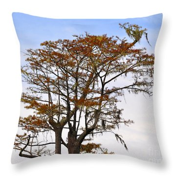 Colorful Cypress Throw Pillow by Al Powell Photography USA